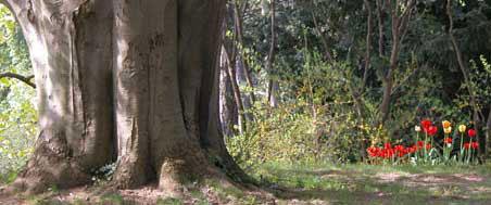 výsadba stromov, výsadba stromu