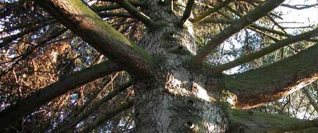 výrub stromov, výrub stromu