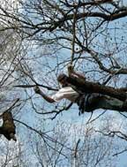 redukcia koruny stromu