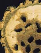 Boj proti škodcom stromu