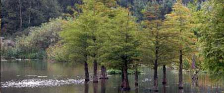 Zlepšenie podmienok na stanovisku stromu